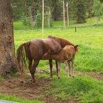 Precious horses
