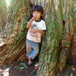 Niño Guarani en base de arbol dde 800 años.