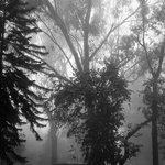 Foggy during the rains