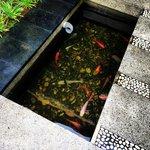 Our villa had fish!