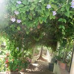 L'escalier du jardin
