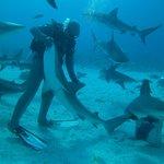 Shark Wrangler