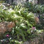 Gardens..