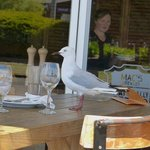 Gulls at the ready to raid tables!