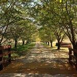 Entrance in Autumn