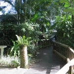 One of many lovely ramp tropical walks within lodge