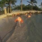Flamingos at the private island