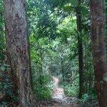 le nature path