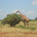 A great Safari