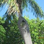 Végétation qui pousse à même le tronc du palmier