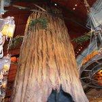 il grande albero al centro