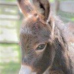 Miniature Donkeys on the Childrens Farm