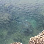 Tortuga y aguas transparentes