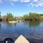 Kayaking in Fakahatchee Strand Reserve on the Mangrove Tunnel Kayak trip