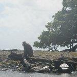 La Paseadora Cruise to Monkey Island