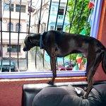 Choco guarding the premises