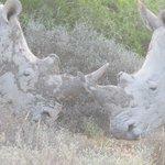 Rhinos debating