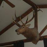 Buck's Lobby