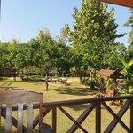 garden at Ban Rai