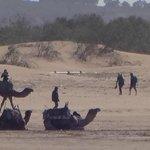 Os camelos aguardando os turistas
