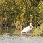 Tierwelt des vor dem Hotel befindlichen Mangrovenwald