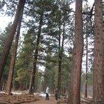 trail in Aspen Grove