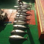 The Tuna we caught on fishing trip