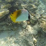 Fish on the House Reef
