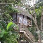 Tree House - Massages