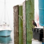 Nearby Galilee is a New England ocean fishing destination