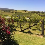 Crooked River Winery & Cellar Door
