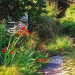 Colourful Summer Garden