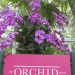 2013 Orchid Show