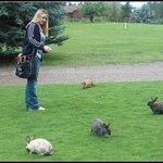 feed the bunnies!