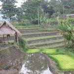 arround villa