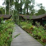 Boardwalk between the rooms and the jungle