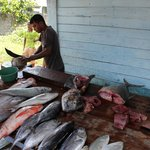 The fishmonger working on a butterfish.