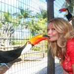 toucan sam eating blueberry from my mouth