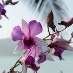 Herrlicher Garten mit Orchideen