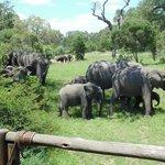 Elephants passing