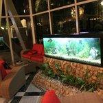Fishtank at the hotel