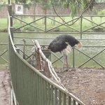 Ostrich....!!