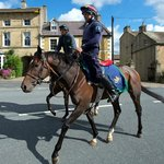 Middleham Race Horses outside The Priory