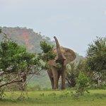 One of the park's many elephants