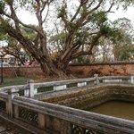 Lotus pond without lotus