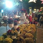 Flower decoration during new year