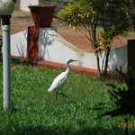 Cranes....in the garden.What a surprise!!!!!