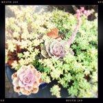 alcune delle molte piante grasse della terrazza