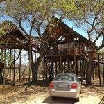 Marula tree house.