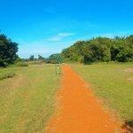 Path at Ilkeliani